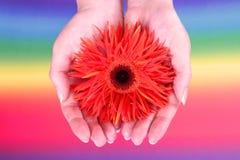 φύση χεριών Στοκ εικόνα με δικαίωμα ελεύθερης χρήσης