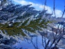 Φύση χιονιού δέντρων Στοκ εικόνα με δικαίωμα ελεύθερης χρήσης