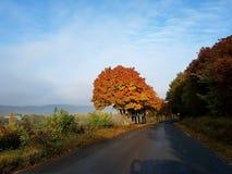 φύση χρωμάτων Στοκ Εικόνες