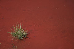 φύση χρωμάτων Στοκ φωτογραφία με δικαίωμα ελεύθερης χρήσης