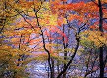 Φύση-100 Στοκ φωτογραφία με δικαίωμα ελεύθερης χρήσης