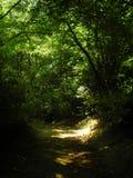 φύση Στοκ Φωτογραφίες