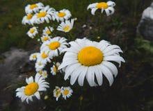 Φύση Στοκ φωτογραφία με δικαίωμα ελεύθερης χρήσης
