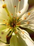 Φύση στοκ εικόνα με δικαίωμα ελεύθερης χρήσης