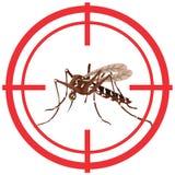 Φύση, Aedes κουνούπια Aegypti με το στόχο ξυλοποδάρων Στοκ Εικόνες