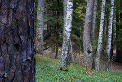 Φύση Dendropark, επαρχία της Lori, Αρμενία στοκ φωτογραφία