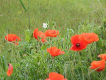 Φύση Fleurs στοκ εικόνες