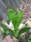 φύση s αγάπης στοκ εικόνα με δικαίωμα ελεύθερης χρήσης