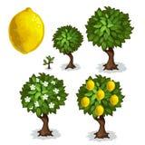 Φύτευση και καλλιέργεια του δέντρου λεμονιών διάνυσμα διανυσματική απεικόνιση