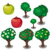 Φύτευση και καλλιέργεια του μήλου διανυσματική απεικόνιση