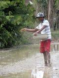 Φύτευση ρυζιού στοκ φωτογραφία με δικαίωμα ελεύθερης χρήσης