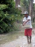 Φύτευση ρυζιού στοκ εικόνα