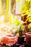 Φύτευση στον κήπο Στοκ φωτογραφία με δικαίωμα ελεύθερης χρήσης