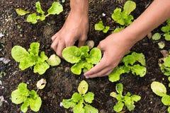 Φύτευση του νέου λαχανικού Στοκ φωτογραφίες με δικαίωμα ελεύθερης χρήσης