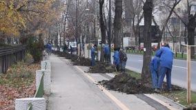 Φύτευση των δέντρων στην πόλη απόθεμα βίντεο