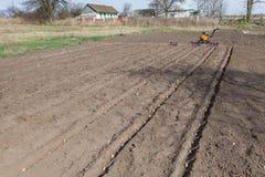Φύτευση των πατατών στο φυτικό κήπο Στοκ φωτογραφίες με δικαίωμα ελεύθερης χρήσης