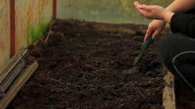 Φύτευση των σπόρων με το χέρι απόθεμα βίντεο