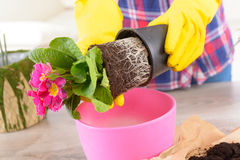 Φύτευση colorfull του λουλουδιού flowerpot στοκ φωτογραφία με δικαίωμα ελεύθερης χρήσης