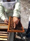 Φύλακας μελισσών στοκ φωτογραφία με δικαίωμα ελεύθερης χρήσης