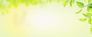 Φύλλα άνοιξη, έμβλημα για τον ιστοχώρο Στοκ Εικόνες