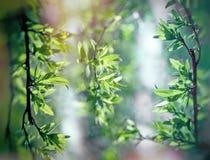 Φύλλα άνοιξη στο δάσος - ξυπνώντας φύση την άνοιξη Στοκ φωτογραφίες με δικαίωμα ελεύθερης χρήσης
