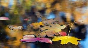 Φύλλα δέντρων σφενδάμνου και σημύδων στη βροχερή λακκούβα Στοκ φωτογραφία με δικαίωμα ελεύθερης χρήσης