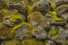 Φύλλα δέντρων Στοκ Φωτογραφίες