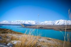 Φύλλα ή φυτά στο άσπρο χιόνι βουνών το χειμώνα, θέσεις παραδείσου στη Νέα Ζηλανδία Στοκ Εικόνες