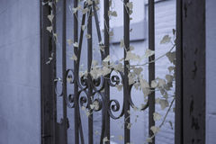 Φύλλα αμπέλων στην πύλη Στοκ Εικόνες