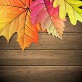 φύλλα αντιγράφων ανασκόπησης φθινοπώρου πέρα από διαστημικό ξύλινο 10 eps Στοκ Εικόνα