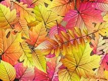 φύλλα αντιγράφων ανασκόπησης φθινοπώρου πέρα από διαστημικό ξύλινο 10 eps Στοκ φωτογραφία με δικαίωμα ελεύθερης χρήσης