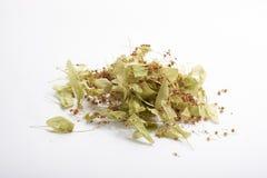 Φύλλα ασβέστη Στοκ Φωτογραφίες