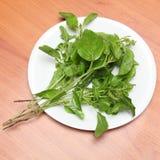 Φύλλα βασιλικού στο πιάτο Στοκ Φωτογραφία