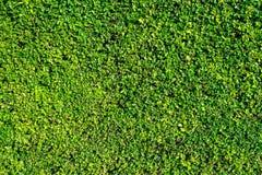 Φύλλα για το υπόβαθρο στον κήπο Στοκ φωτογραφία με δικαίωμα ελεύθερης χρήσης