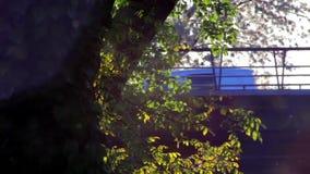 Φύλλα γύρης και δέντρων στον αέρα στο σούρουπο και την κυκλοφορία φιλμ μικρού μήκους