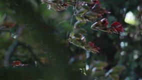 Φύλλα ενός δέντρου που ταλαντεύεται στον αέρα Καλοκαίρι Κινηματογράφηση σε πρώτο πλάνο φιλμ μικρού μήκους