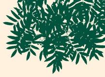 φύλλα ενός δέντρου σορβιών Στοκ Φωτογραφία