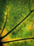 Φύλλα λεπτομέρειας ενός δέντρου αναδρομικά φωτισμένου Στοκ εικόνες με δικαίωμα ελεύθερης χρήσης