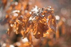 Φύλλα λεπτομέρειας σε ένα δέντρο το φθινόπωρο Στοκ Εικόνες