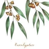 Φύλλα ευκαλύπτων Watercolor Στοκ Φωτογραφίες
