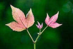 φύλλα ζωηρά Στοκ Φωτογραφίες