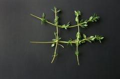 Φύλλα θυμαριού που διαμορφώνουν τους τιποτένιους και τους σταυρούς Στοκ Εικόνα
