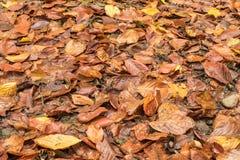 Φύλλα και λάσπη Στοκ φωτογραφία με δικαίωμα ελεύθερης χρήσης