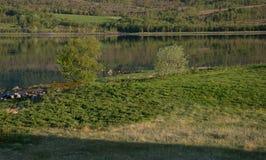 Φύλλα και αντανακλάσεις Στοκ εικόνα με δικαίωμα ελεύθερης χρήσης