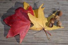 Φύλλα και βελανίδια πτώσης Στοκ εικόνα με δικαίωμα ελεύθερης χρήσης