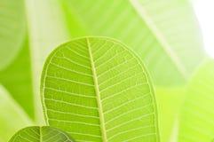 Φύλλα και ελαφρύ υπόβαθρο Στοκ Φωτογραφίες