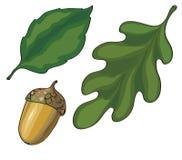 Φύλλα και διάνυσμα βελανιδιών Στοκ Εικόνες