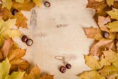 Φύλλα και κάστανα φθινοπώρου στον πίνακα Στοκ φωτογραφίες με δικαίωμα ελεύθερης χρήσης