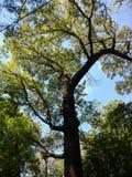Φύλλα και κλάδοι Στοκ Φωτογραφία
