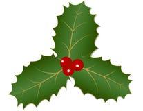 Φύλλα και μούρα της Holly Στοκ φωτογραφία με δικαίωμα ελεύθερης χρήσης